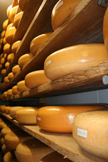 cheese ripening in a cheese cellar
